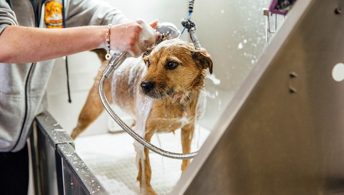 Forest Ridge offers an On-Site Pet Spa for your 4-legged furry friend!